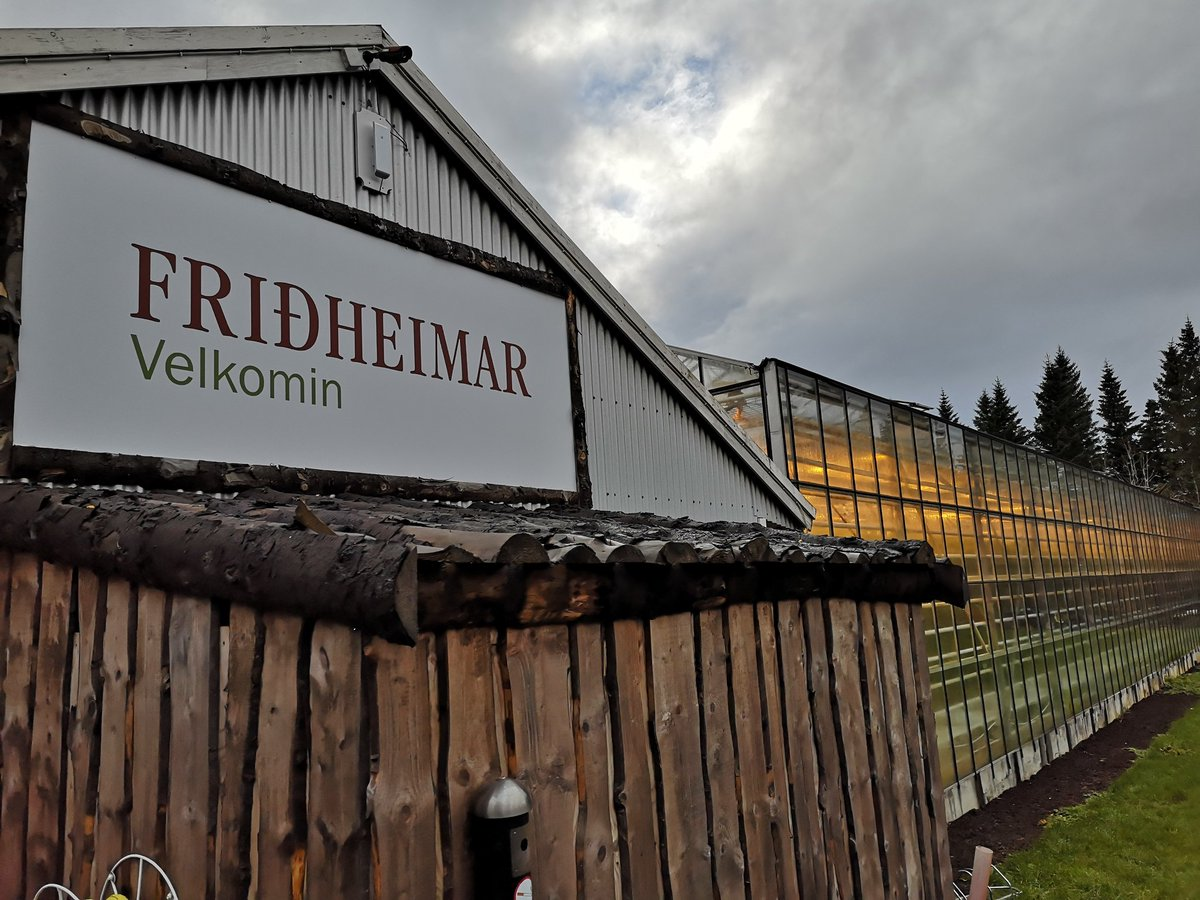#Fridheimar Tomato Greenhouses. Dining in a working greenhouse, would love to see this concept in Wales or London! @FarmingConnect #agriacademy https://twitter.com/MalanHughes/status/1052184438883450880/photo/1pic.twitter.com/fFm5udZQV8