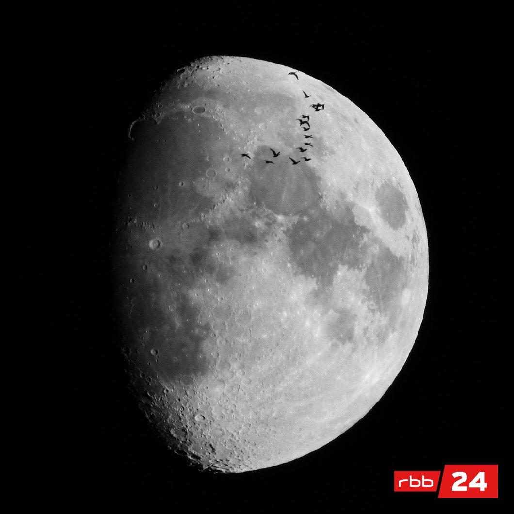 Da hat uns ein User, der anonym bleiben möchte, gerade ein wunderschönes Geschenk in Form dieses Fotos gemacht: ein Schwarm Gänse vor dem Mond 🌔 Wir sind hin und weg 🤩