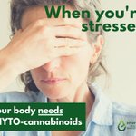 #Phytocannabinoids are compounds from plants 🌿 that target receptors in the #endocannabinoid system. Some phytocannabinoids are responsible for regulating #stress & #anxiety to help keep you calm 😊 & relaxed. More here ---> https://t.co/5h0dGz4JqC