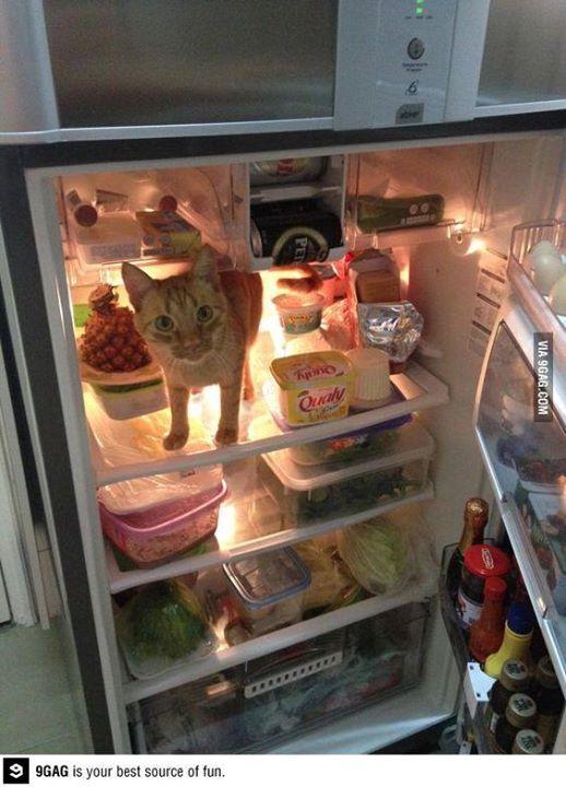 Смешные картинки про еду и холодильник, открытки