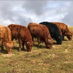 Image for the Tweet beginning: On Octomore Farm, Islay, James