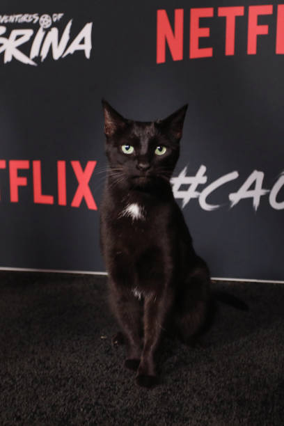 For the next week, please only talk to me about Salem walking the red carpet for Chilling Adventures of Sabrina