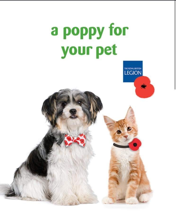 Pets At Home Chesterfield Pahchesterfield Twitter