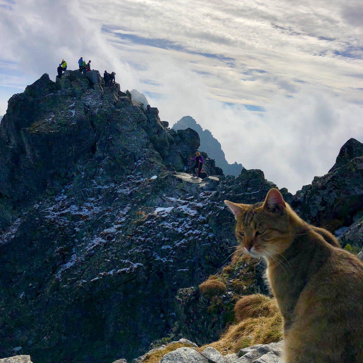 кот высоко в альпах