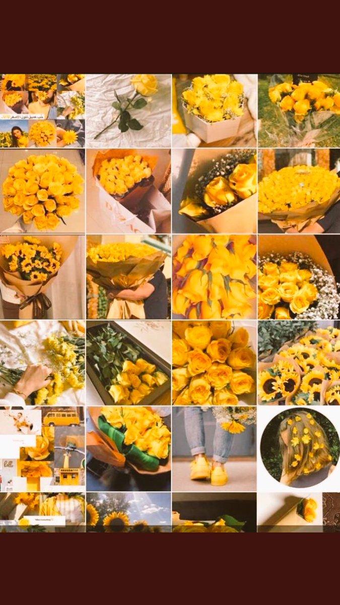 أصفر Yellow On Twitter اللون الأصفر في علم النفس يبهج ويدخل السرور قوله تعالى بقرة صفراء فاقع لونها تسر الناظرين