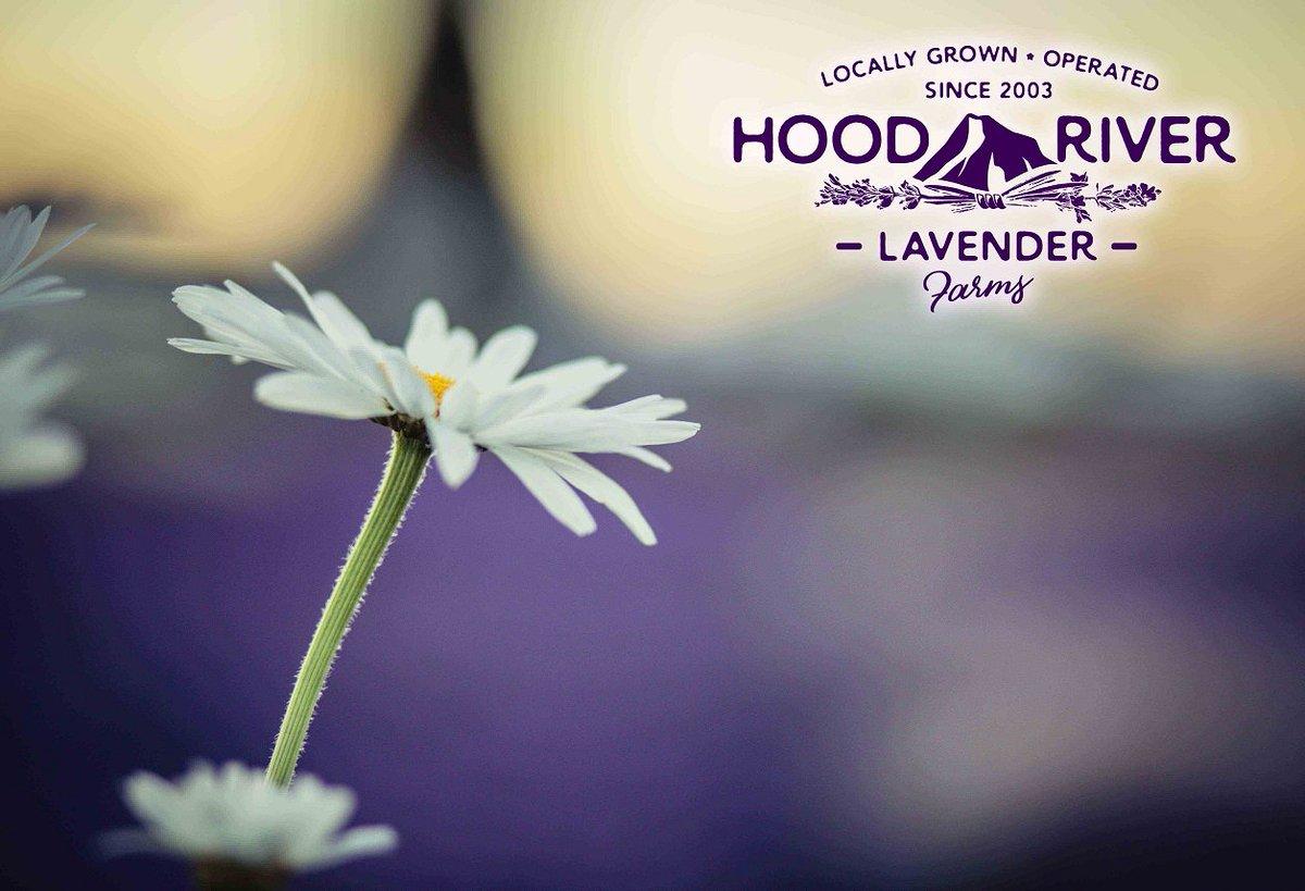 Hood River Lavender Farm (@Lavenderfarm) | Twitter