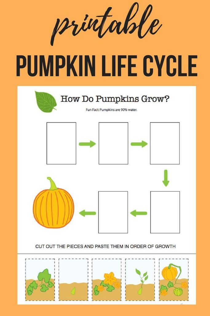 photo regarding Life Cycle of a Pumpkin Printable titled The Ginger Trainer upon Twitter: \