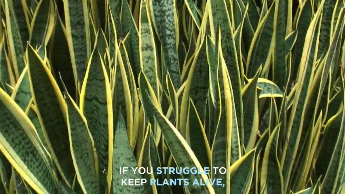 You'd actually have to try to kill these plants.