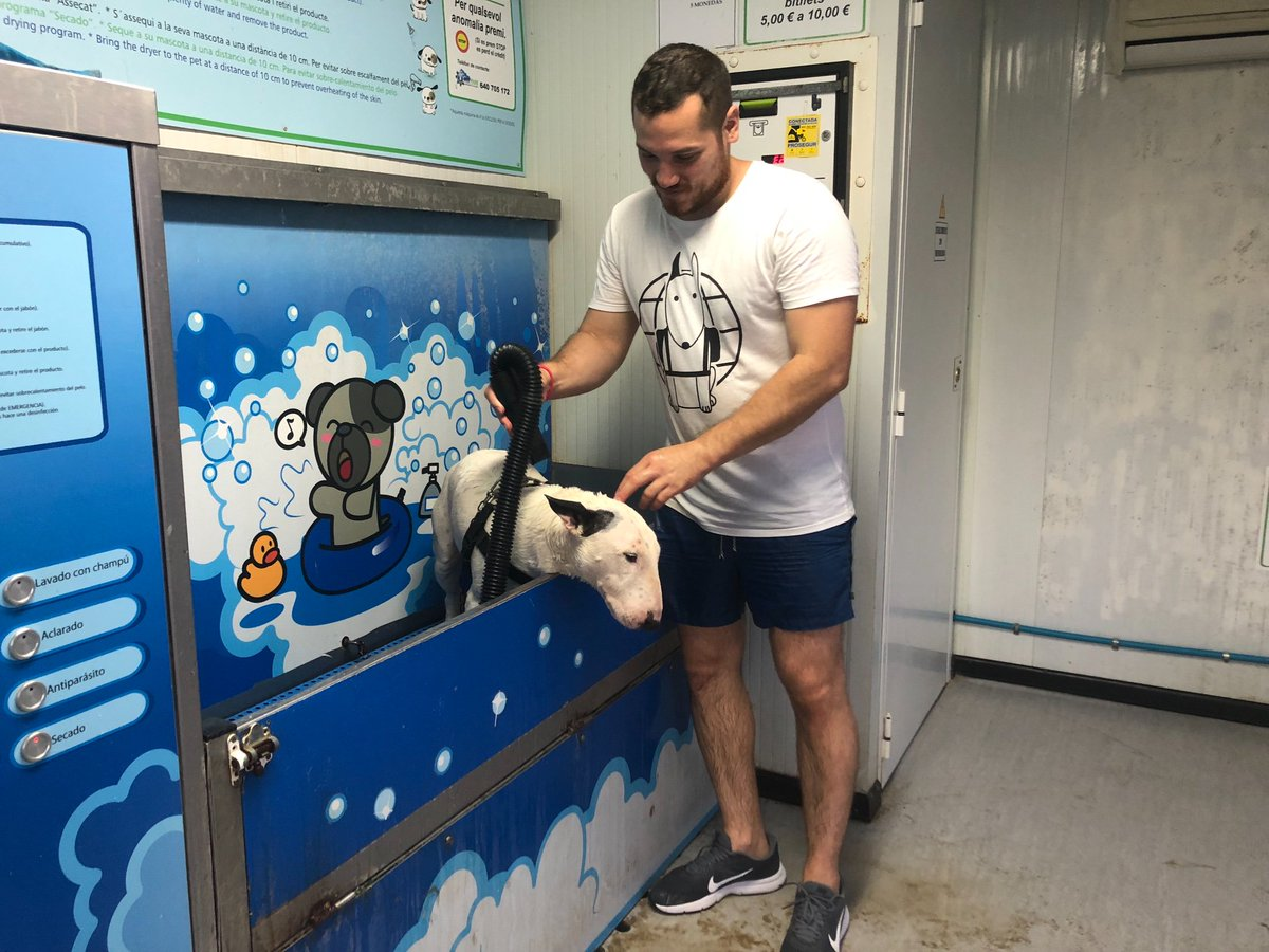 Not looking too thrilled whilst getting a post-roll around in the sand bath! Though this little dog wash station next to the dog beach is pretty cool! . . . #dogbath #dog #DogsOfTwitter #spain #tarragona #bullterrier #DogsOfInstagram #dogtravel #traveldog #puppy<br>http://pic.twitter.com/GtnWcOmtIV