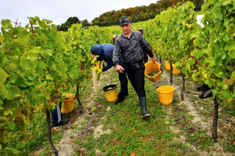 Bumper harvest gives #English winemakers extra fizz https://t.co/wbWXccyEsN