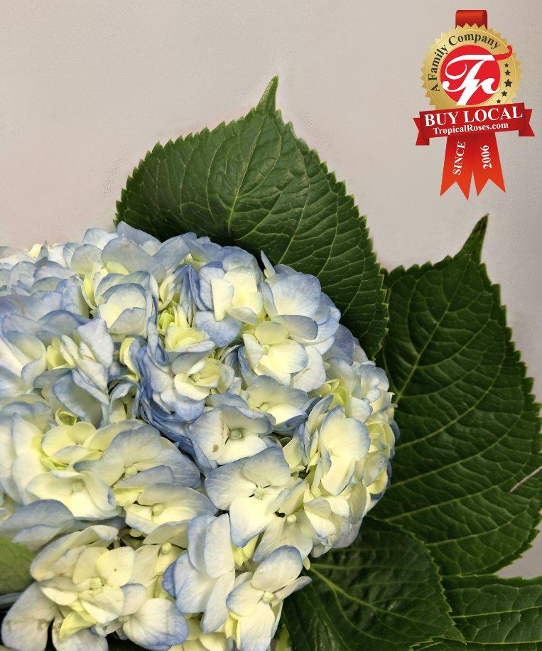 ... new specialy dedicated wholesale web page. #florist #atlanta #atl #love #gwinnett #ga #wedding #weddingplanner #lawrencevillepic.twitter.com/8S5hg25DqN