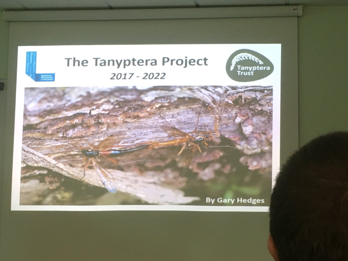 Tanyptera hashtag on Twitter
