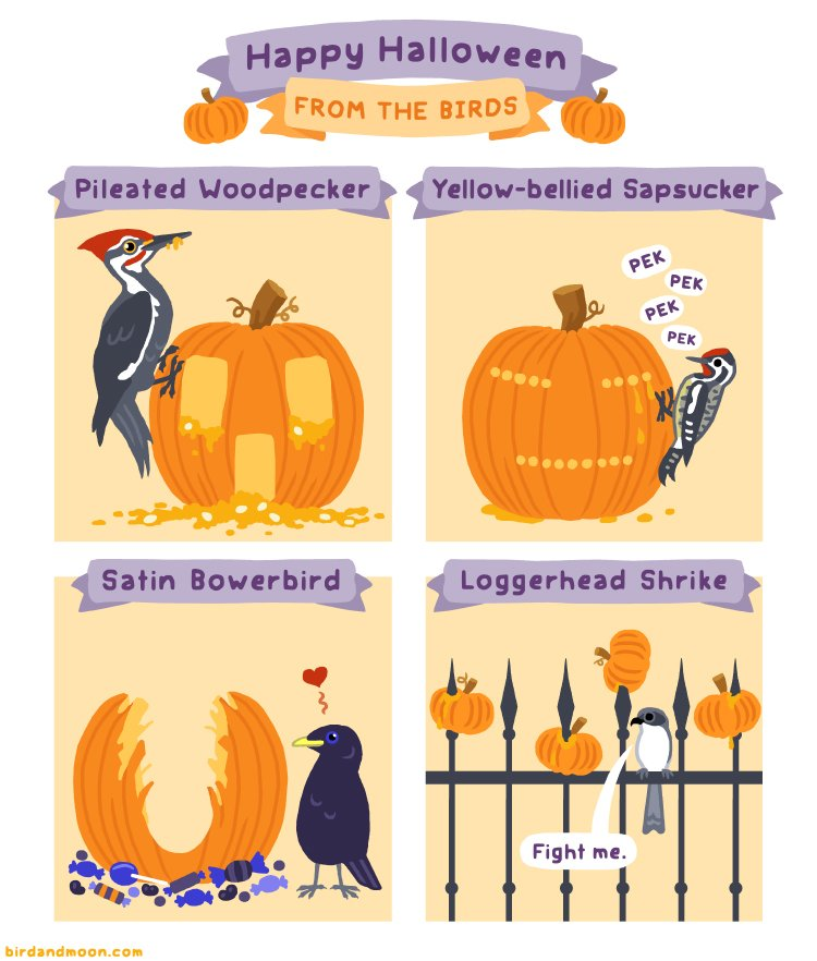 Happy Halloween From The Birds birdandmoon.com/comic/happy-ha…