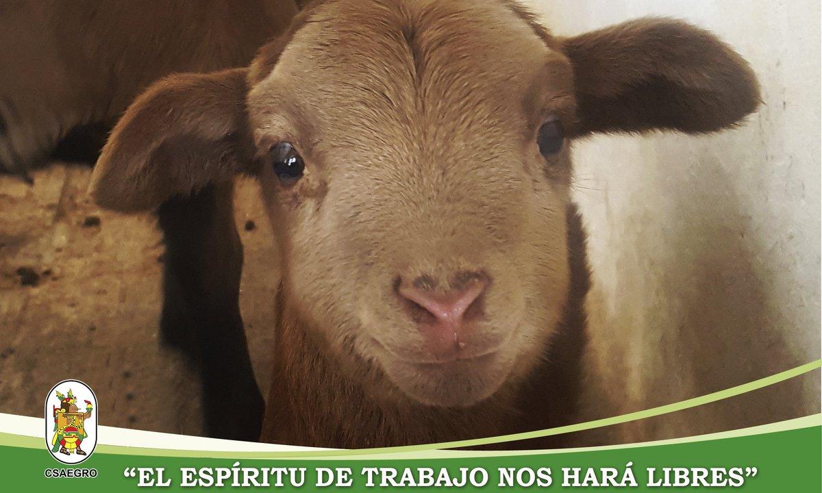 """""""Ríe y el mundo reirá contigo"""" #FelizMartes  #ovina #caprina #Zootecnia #Fitotecnia #espírituCSAEGRO"""