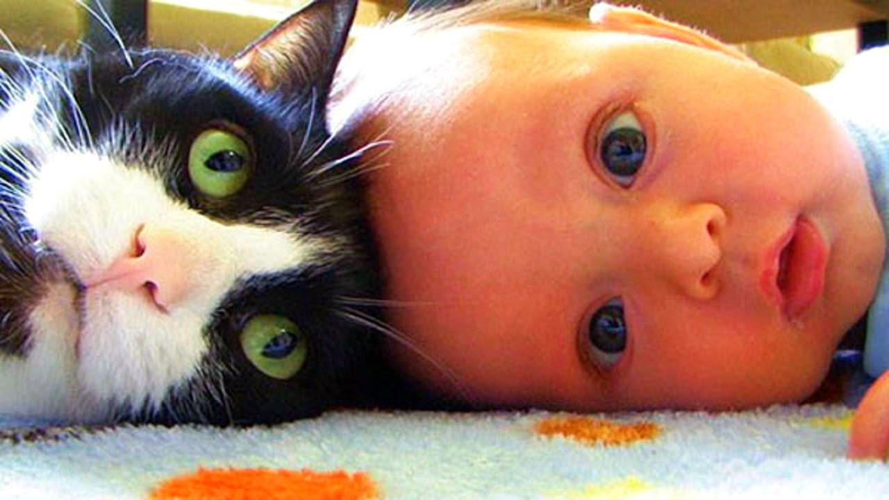 француженке прикольные картинки кошек с детьми да