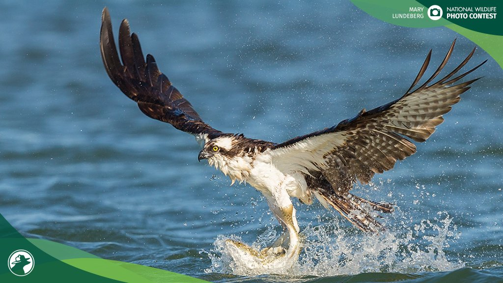 """When we fail to reduce mercury from sources like coal plants, it winds up in our waterways & builds up in our food chain, especially within fish populations,"""" said @Collin_OMara, @NWF President & CEO. Learn more about the proposed @EPA mercury rollback: bit.ly/2RAHK0a"""