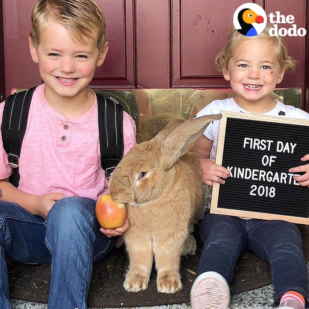 This massive bunny is almost as big as his human siblings �� https://t.co/kErrW0kIWw