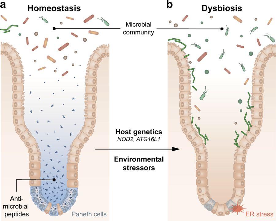 dysbiosis means)