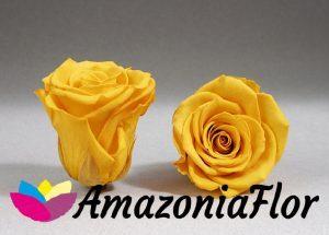 Amazoniaflores On Twitter Significado De Las Rosas Según Su Color