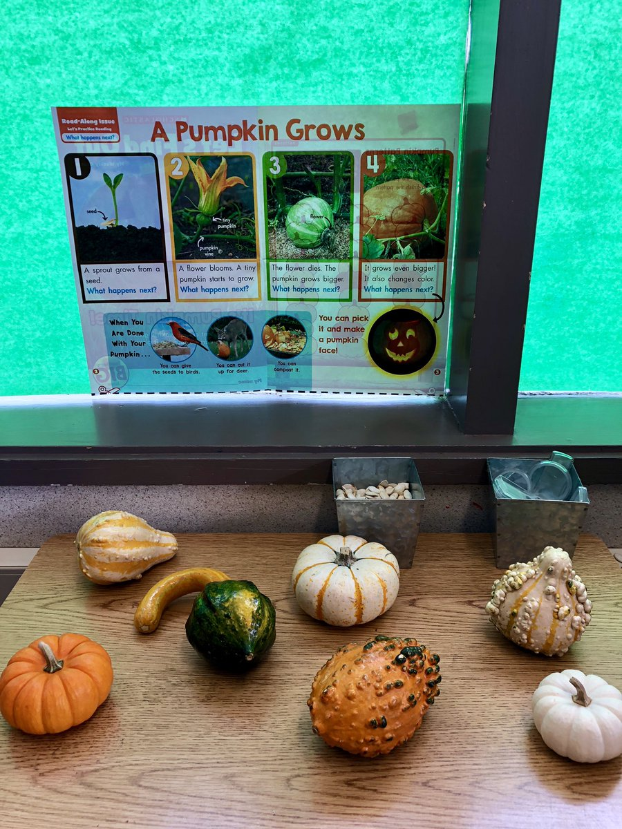 Exploring different types pumpkins this week in kindergarten! 🎃🧡 #carltonusd #USDLearns
