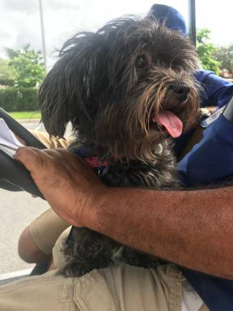 20 Top Pictures Craigslist South Florida Palm Beach Pets ...
