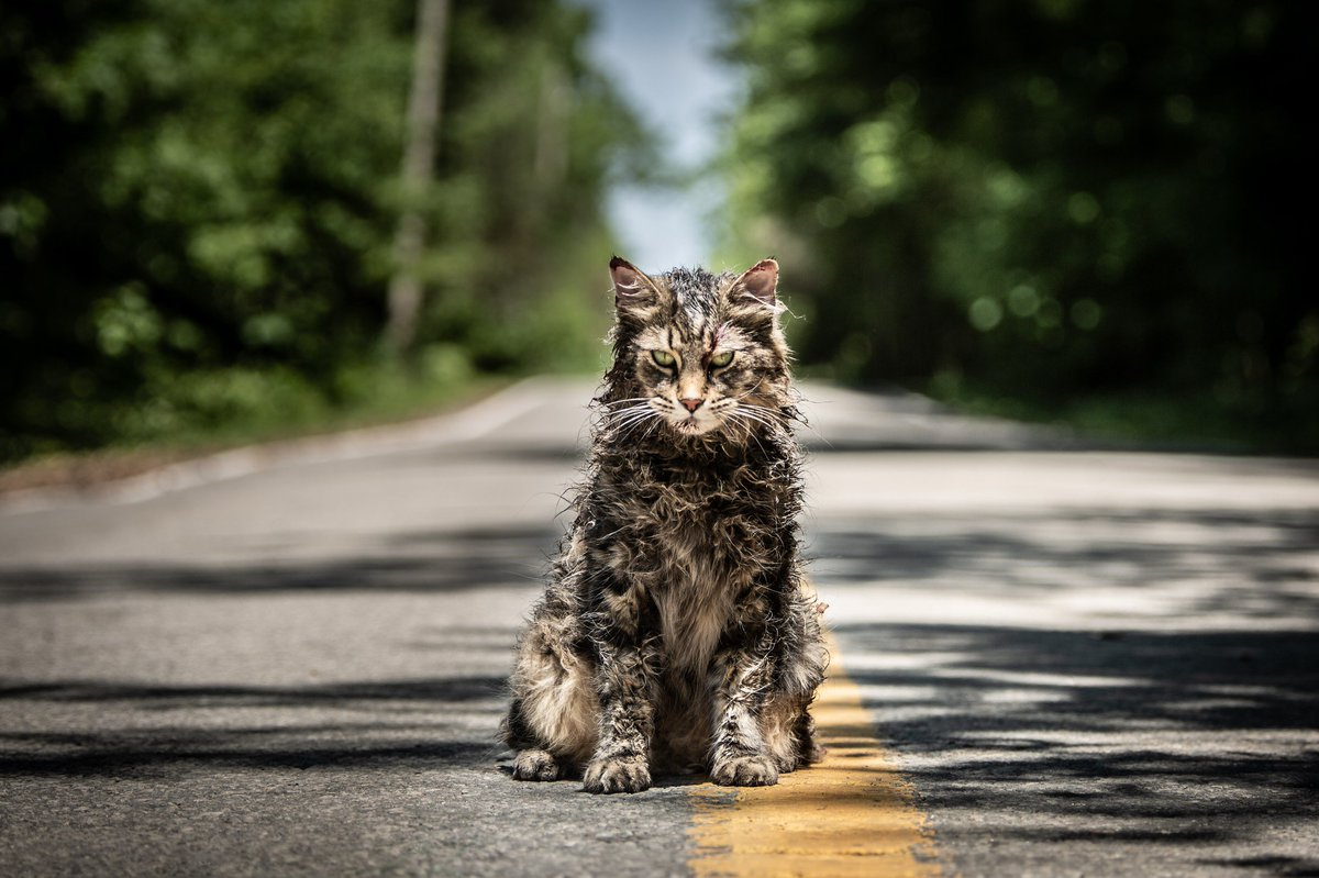 When you&#39;re sitting around waiting for that Pet Sematary trailer.  It&#39;s coming. Wednesday! <br>http://pic.twitter.com/1WAb1vfyT7