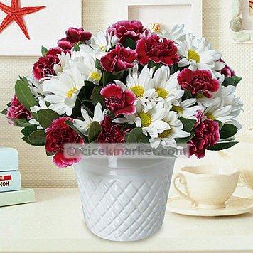 çiçek Market On Twitter Papatya Ve Karanfil Bahçesiyle