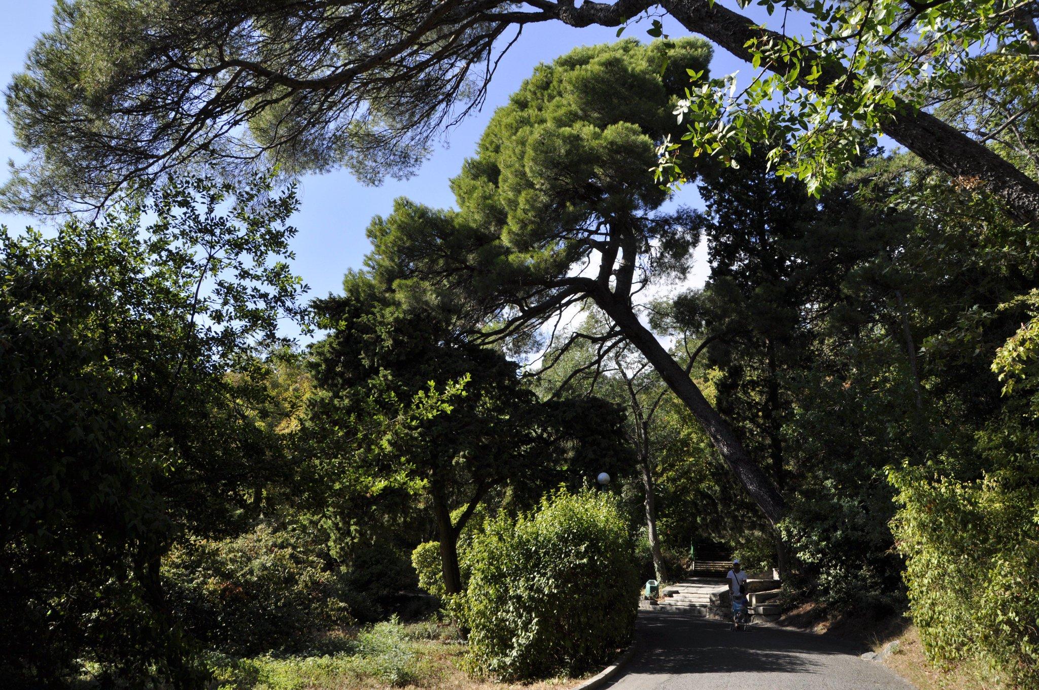 огорчению, картинка мисхорский парк хайда квакиутл, образ