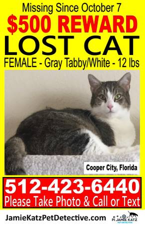 Miami Lost & Found (@MiamiLostFound) | Twitter