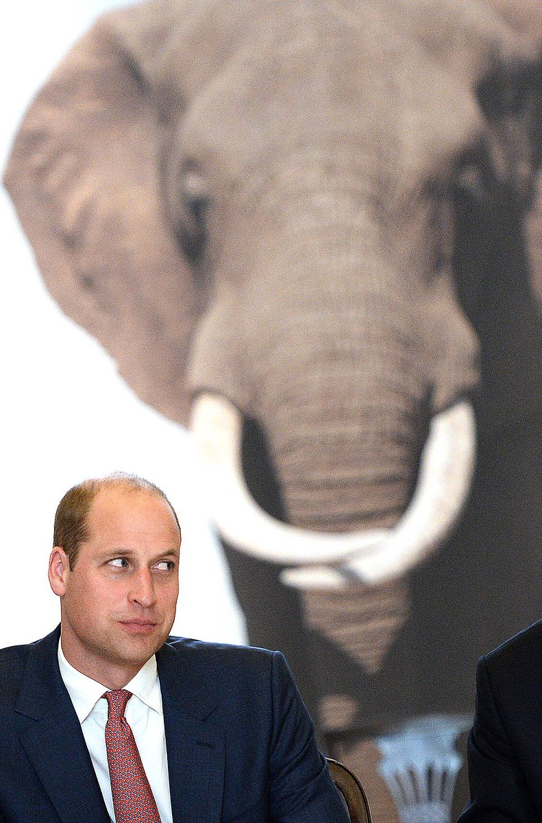 When you finally have to acknowledge the elephant in the room... #PrinceWilliam