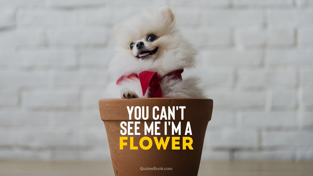 Image result for https://quotesbook.com/quotes-with/Funny-dog-memes