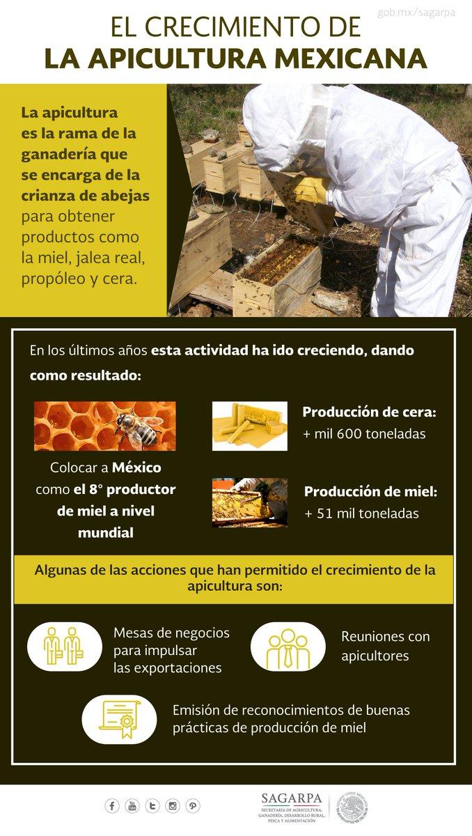 87180a35d3c ... con 1.9 millones de colmenas para producción miel que generaron un  total de 51 mil 65 toneladas del dulce y mil 618 toneladas de cera de  abeja. 🐝🇲🇽🍯