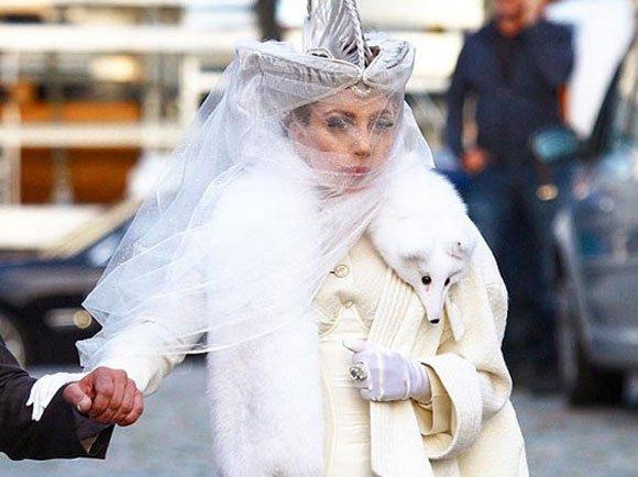 Kết quả hình ảnh cho 7 month baby fox skinned for Gaga