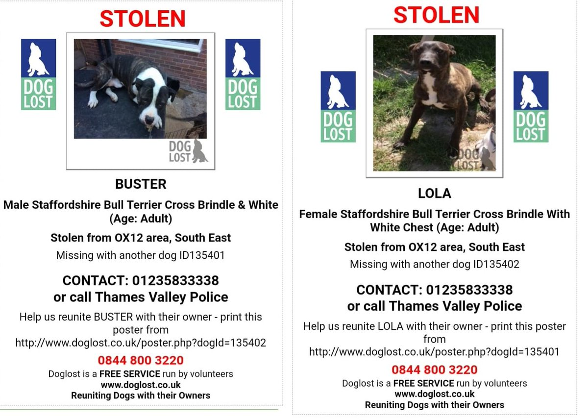 Stolen: BUSTER &amp; LOLA Brindle &amp; White #StaffordshireBullTerrier #STOLEN #Wantage #OX12 both dogs microchipped with STOLEN alert on record @ThamesVP investigating disappearance #ScanMe #missingdog @DoglostUK #doglostuk #doglost #Dogtheft #Pettheftreform  http://www. doglost.co.uk/dog-blog.php?d ogId=135402 &nbsp; …  …<br>http://pic.twitter.com/48ezH0jviK
