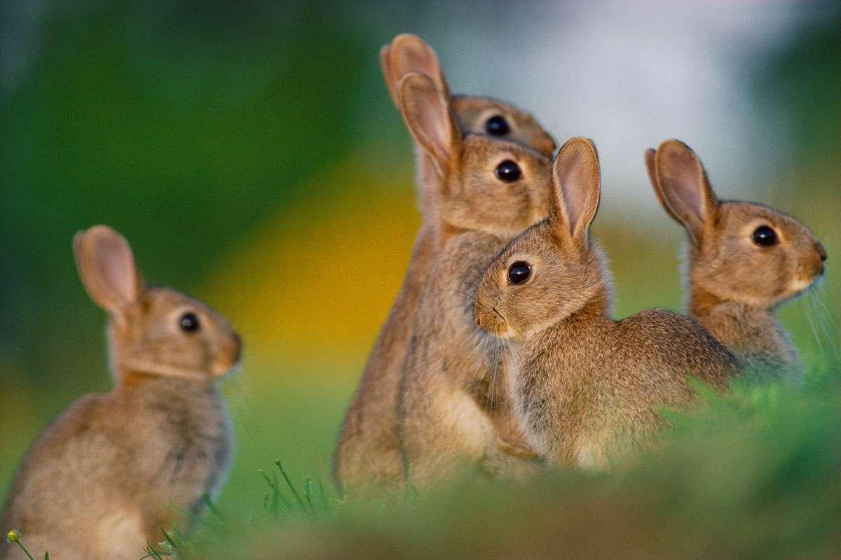 Rabbits flee when they smell dead relatives in predators' droppings https://t.co/B79P39gKMo https://t.co/B5PwEOp7HL