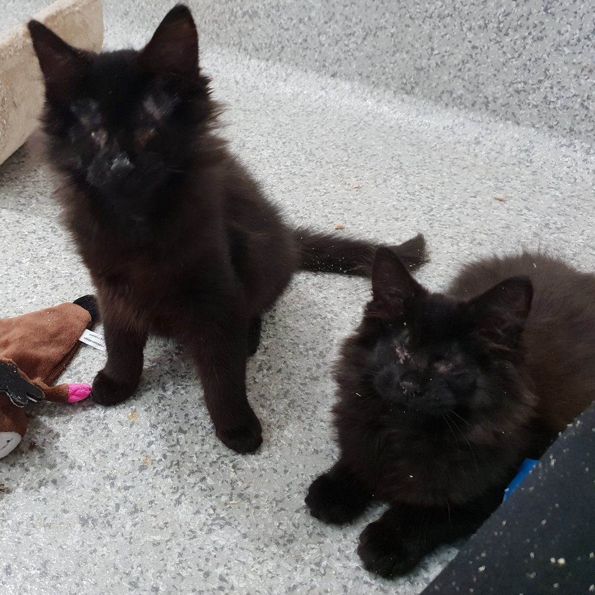This #WorldSightDay we&#39;re appealing for a special home for blind kittens Marrok and Rodolfo @CatsSouthLondon now they&#39;ve recovered from eye surgery. Read more about them at  https:// mitcham.cats.org.uk/mitcham/adopt- a-cat &nbsp; … <br>http://pic.twitter.com/wgMBN33rCR