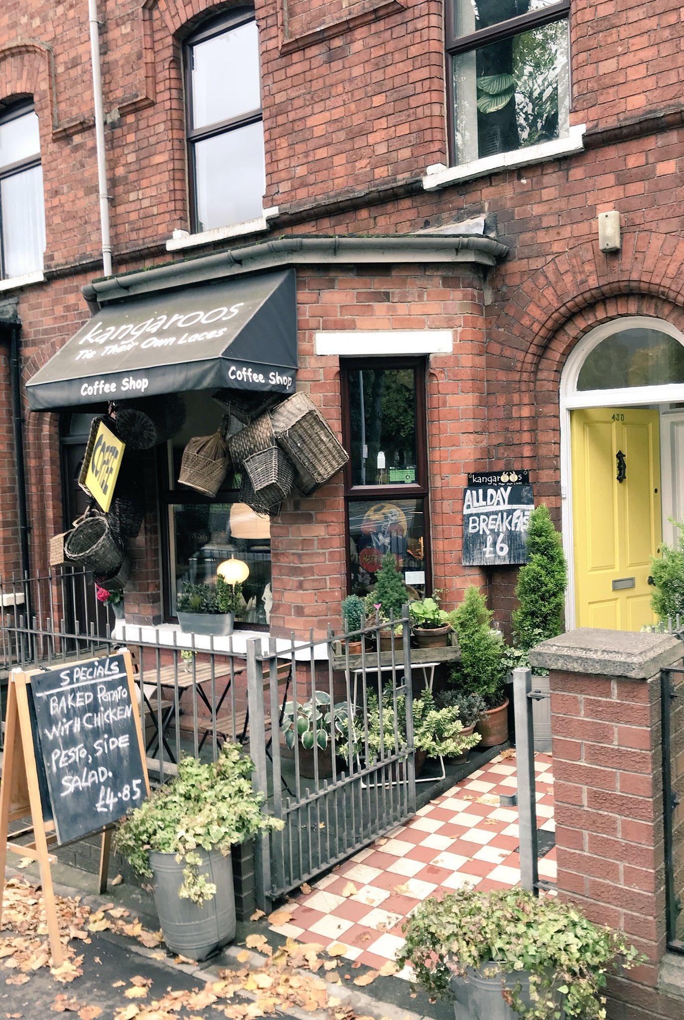 Belfast coffee shops Kangaroos tie their own shoe laces