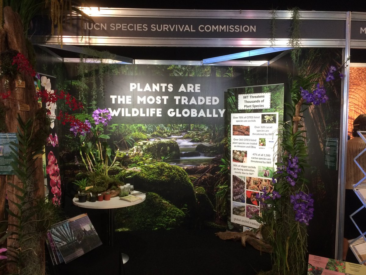 The best stand at #endwildlifecrime #iwt18! End #plantblindness on illegal wildlife trade - plants are massively threatened by trade<br>http://pic.twitter.com/qWuGCnUEa7