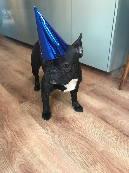 Happy Birthday lovely from Ernie the dog and me xxxx