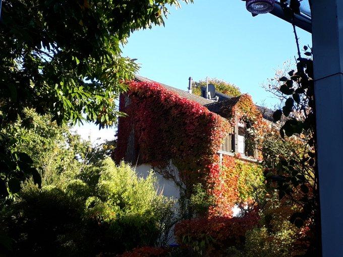 So, Liebeleins, im Garten isses Herbst, wer möchte denn Maronen zum BuCon mitgebracht bekommen? @minorgravitas? Foto