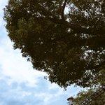 CORTEZ6329のサムネイル画像
