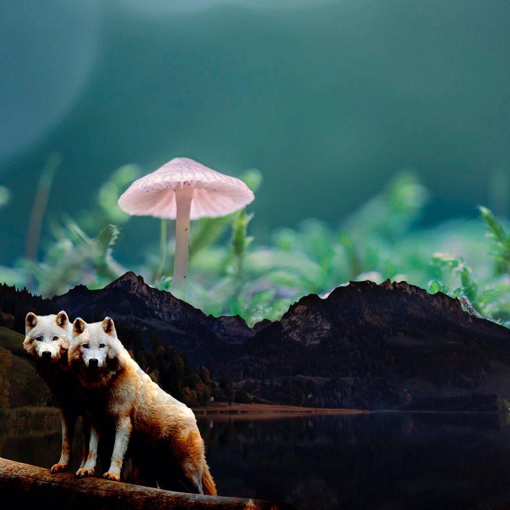 Gleb Strauss on Twitter: Wolf #astronomy #art #photography #PhotoOfTheNight #Brasil #mushroom #psychedelic #Astronaut #mars…