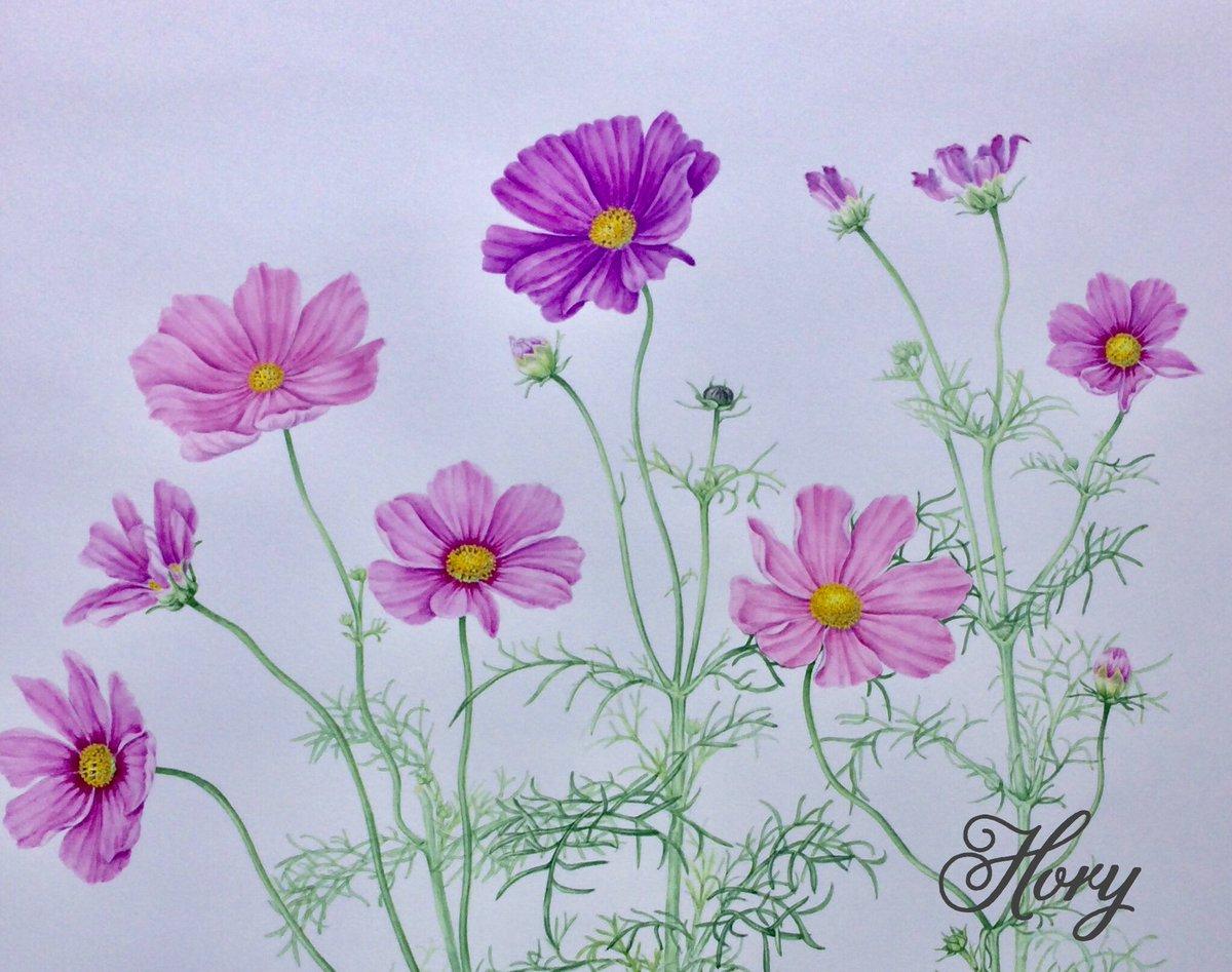 [50歳以上] 夏の花イラスト