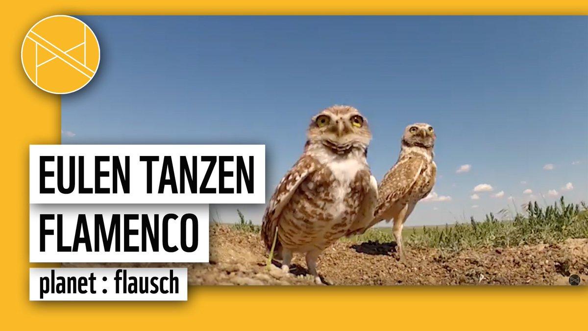 WWF Deutschland (@WWF_Deutschland)   Twitter