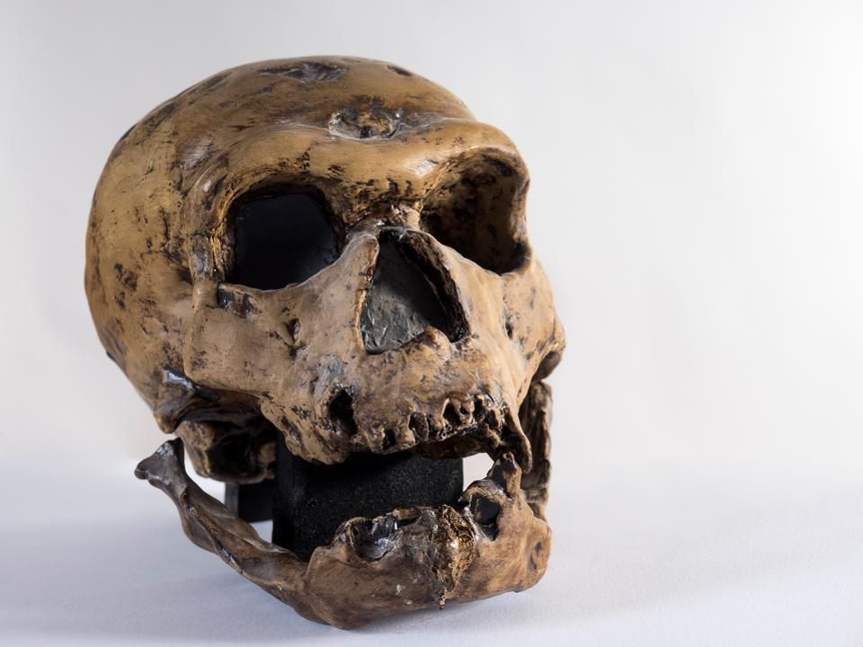 Genetic exchange between modern humans and Neanderthals included both poisons and antidotes https://t.co/vG4jTV7UZW https://t.co/vq2jlbAONY