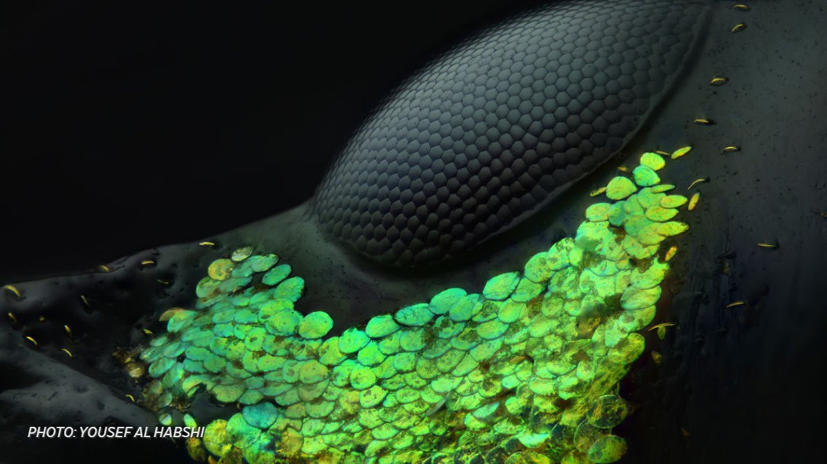 From the eye of a beetle to spider embryos: Photos reveal the world's microscopic wonders https://t.co/yGdWudvTeK