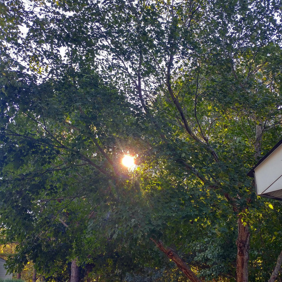Sister Toldjah 🤔 on Twitter: Has been a beautiful #fall morning in Charlotte. Cooler temperatures. Light breeze. Perfect day for apple cider and a pumpkin spice muffin. 🍂🍁🍃  #autumn #cltwx #TGIF #nature…
