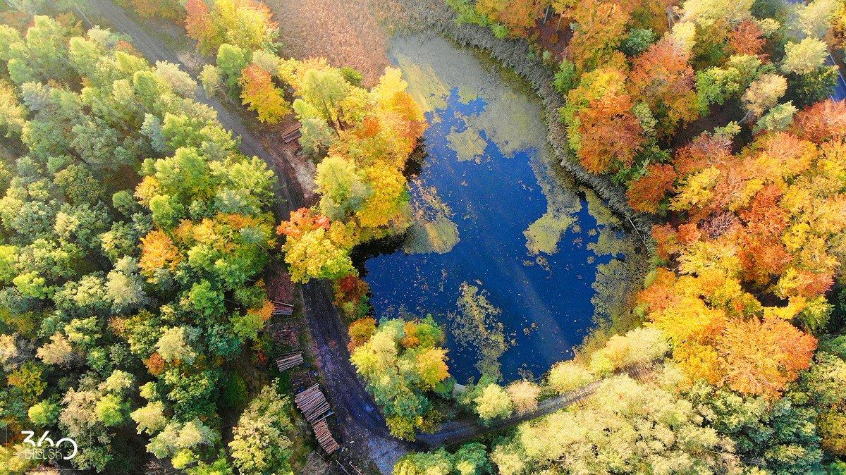 bielsko360 on Twitter: Piękna polska #jesień z drona 🙃  #photooftheday #fotografia #fotografiadnia #BielskoBiała #photography #drone #dronephotography #DronePic #aerialphotography #aerialphoto #bielsko #droneoftheday #BielskoBiala #autumn #jesien #colors #polskajesień #lake #pond #trees #drones…