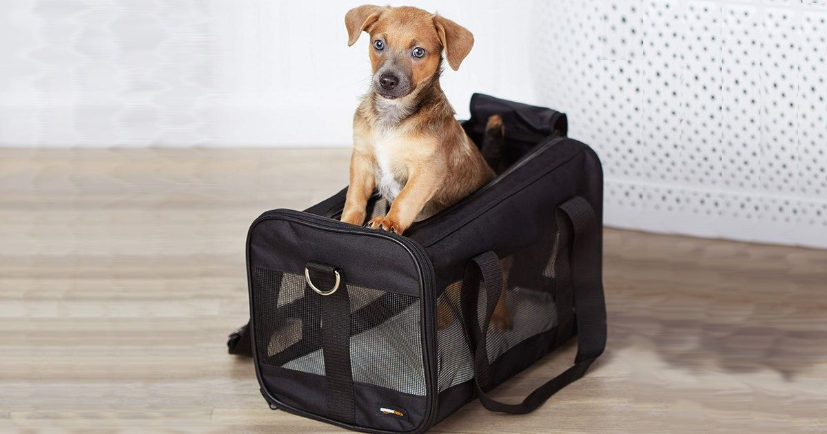 Before flying with your pet, you&#39;ll want to make sure you have an airline approved carrier! Here are a few that meet the criteria! #pettravel #dogsonplanes #dogtravel #airlines  https:// buff.ly/2zp9td1  &nbsp;  <br>http://pic.twitter.com/PjPmApHW3r