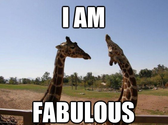 giraffe meme: I'm fabulous!